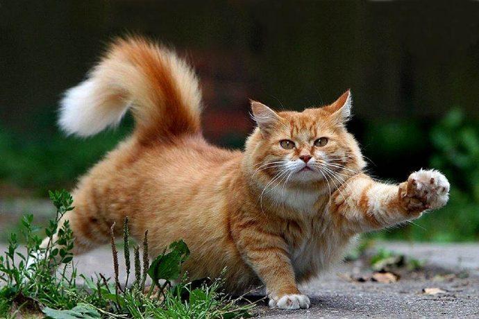«Кот, который любил гулять сам по себе...» Почему кошки сбегают из дома? рис 3