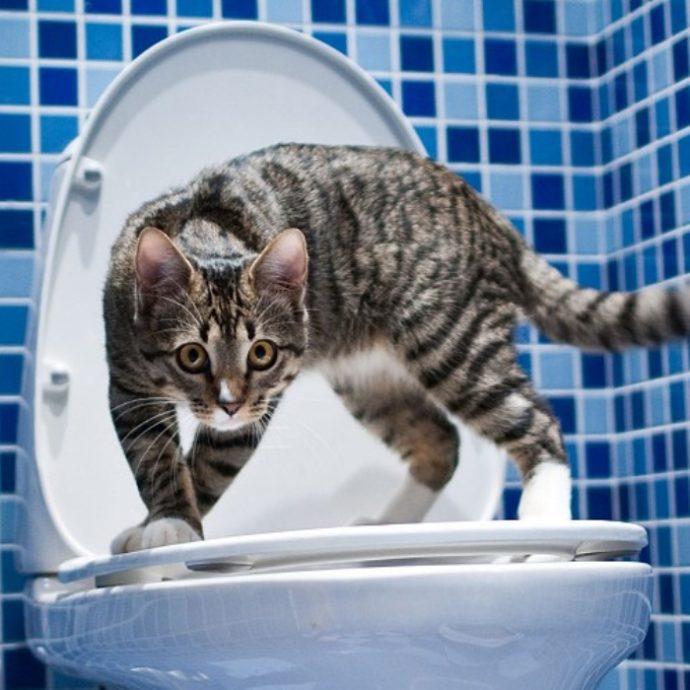 Биотуалеты для кошек - интересная новинка! Понравится ли вашему котейке такое чудо техники?