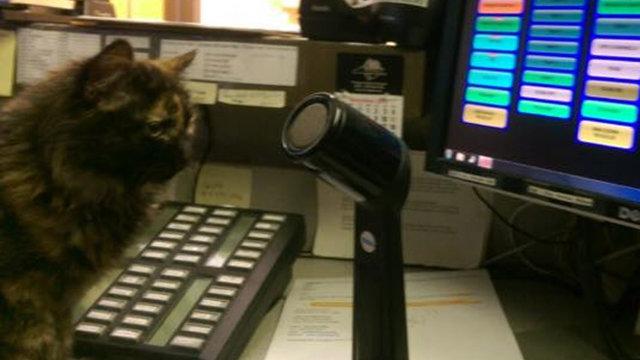 """""""Мурр-мяу, это полиция!"""" Приблудный котёнок по имени Сквизи покорил всех полицейских города! рис 4"""