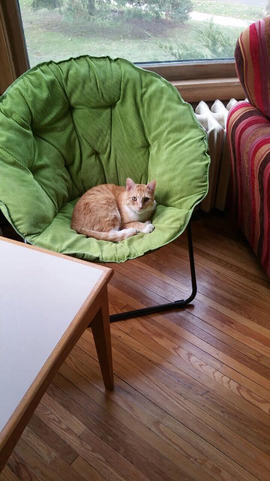 Двойная жизнь кота Макса... Этот проказник успел наделать шуму на всю страну! Смотрите сами : ) рис 3