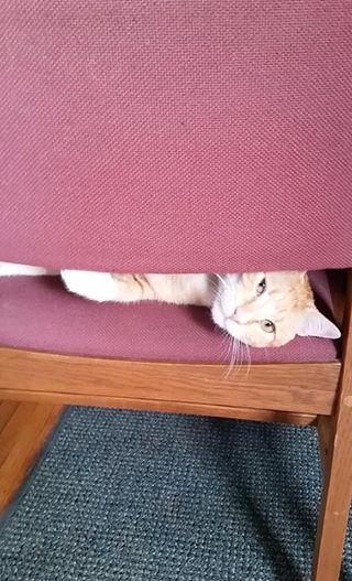 Двойная жизнь кота Макса... Этот проказник успел наделать шуму на всю страну! Смотрите сами : ) рис 2