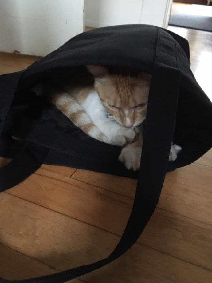 Двойная жизнь кота Макса... Этот проказник успел наделать шуму на всю страну! Смотрите сами : ) рис 4