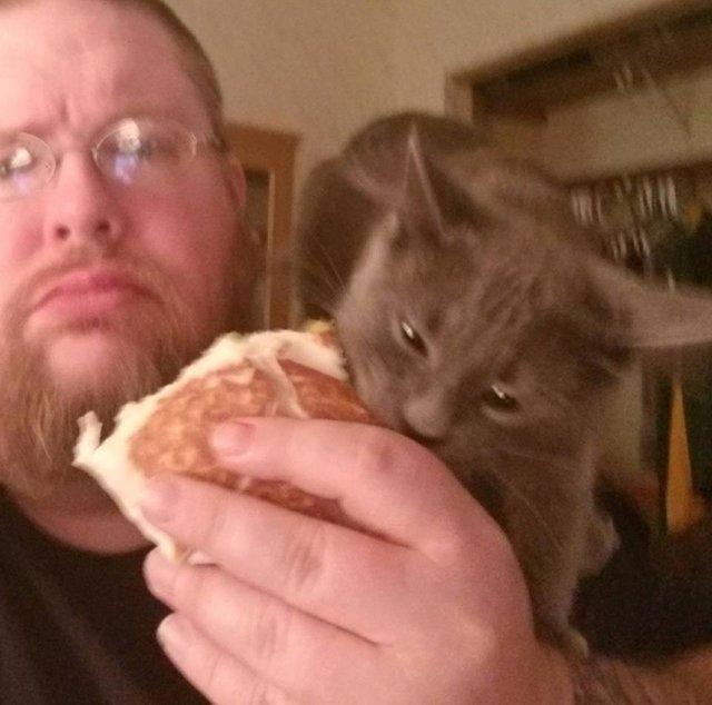 """""""Он не голоден, просто охотится на человеческую еду!"""" Этот странный кот не даёт хозяевам ни завтракать, ни обедать... Смотрите сами!) рис 2"""