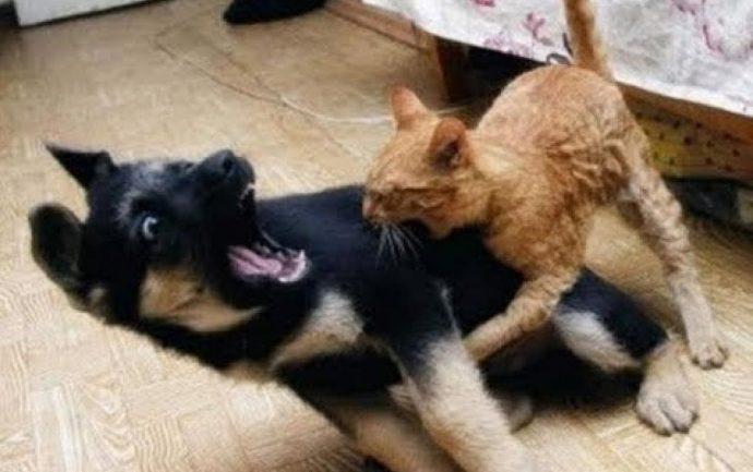 «Кот, который любил гулять сам по себе...» Почему кошки сбегают из дома? рис 5