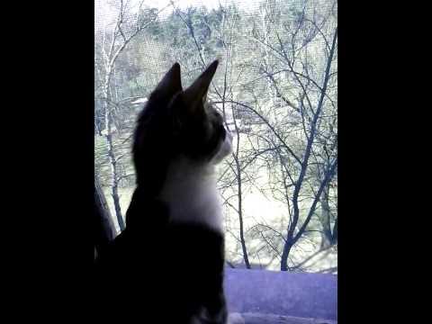 «Кот, который любил гулять сам по себе...» Почему кошки сбегают из дома? рис 6