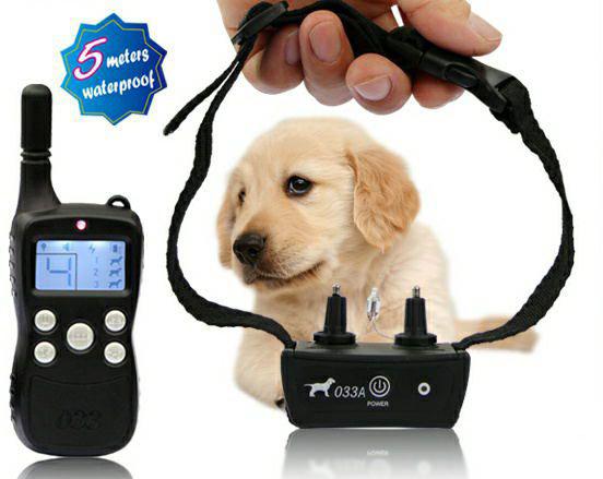 """Электрошоковый ошейник – ПЫТКА для вашей собаки! Вся правда о том, как работает это """"украшение"""""""