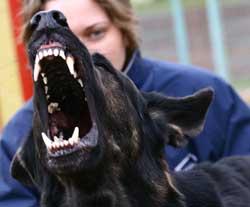 """Электрошоковый ошейник – ПЫТКА для вашей собаки! Вся правда о том, как работает это """"украшение"""" рис 3"""