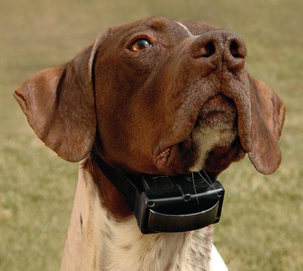 """Электрошоковый ошейник – ПЫТКА для вашей собаки! Вся правда о том, как работает это """"украшение"""" рис 4"""