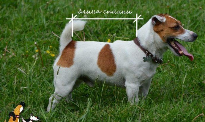 Одежда для собак своими руками: как сшить модную попону? рис 2