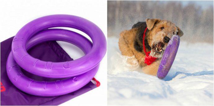 Что подарить на Новый Год любимой собаке? Идеи для обоюдной радости! рис 2