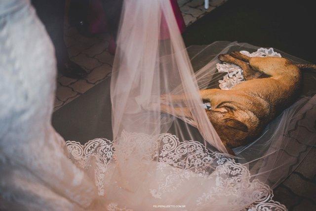 «Когда я шла к алтарю, он улёгся прямо на мою фату и захрапел!!!» О том, как бездомный пёс перевернул свадьбу вверх дном и нашёл себе ДОМ) рис 2