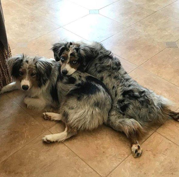 """Слепую собаку записали в """"плембрак"""" и собирались выбросить, но её спасла родная сестра! рис 3"""