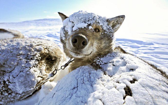 Особенности ухода за питомцем в холодное время года: решаем зимние проблемы! рис 5