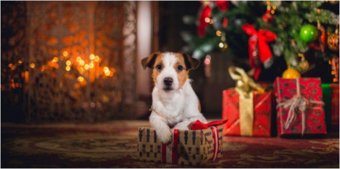 Что подарить на Новый Год любимой собаке? Идеи для обоюдной радости! рис 6