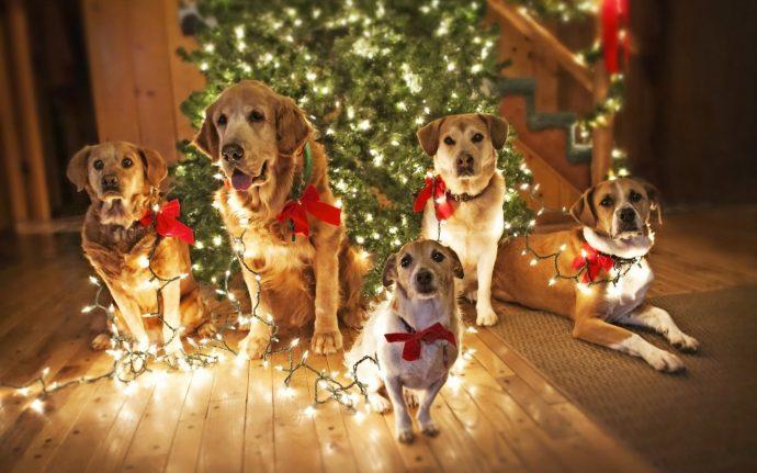 Что подарить на Новый Год любимой собаке? Идеи для обоюдной радости!