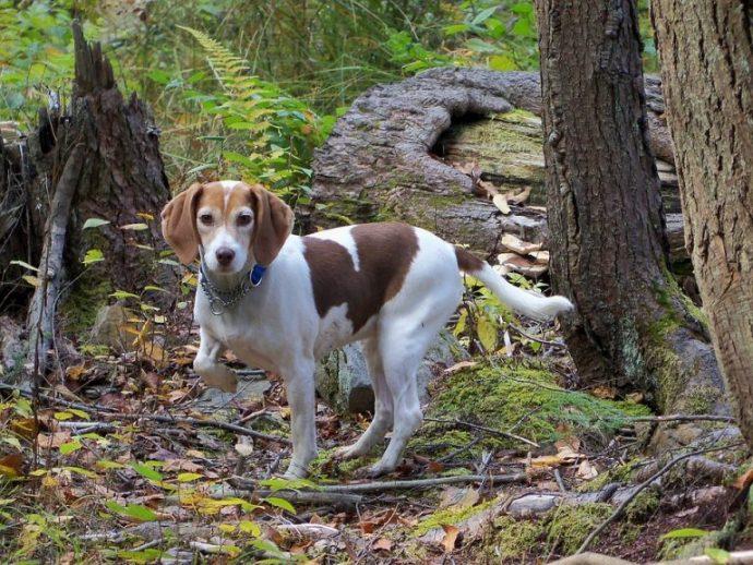 «Я тебя не брошу!» Собака, охранявшая заблудившегося мальчика, стала национальным героем! рис 8