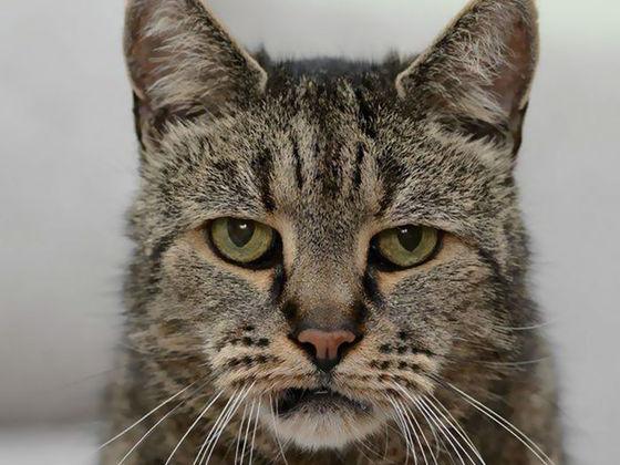 «Кот, который любил гулять сам по себе...» Почему кошки сбегают из дома? рис 2