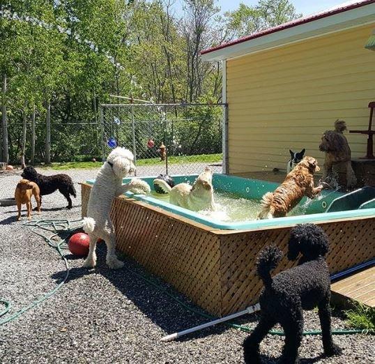«Каждое утро этих малышей забирает школьный автобус...» В Новой Шотландии открыли настоящую школу... для собак! рис 10