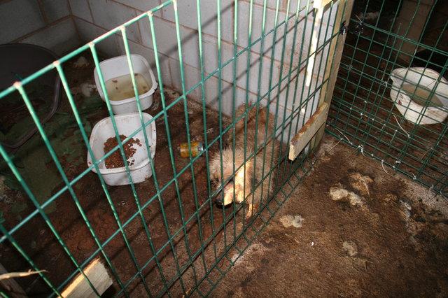 Служба помощи животным спасла щенков от заводчика-живодёра! Мужчина в тюрьме, а малыши чувствуют себя намного лучше...
