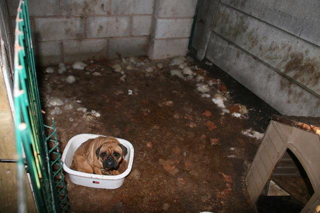 Служба помощи животным спасла щенков от заводчика-живодёра! Мужчина в тюрьме, а малыши чувствуют себя намного лучше... рис 2