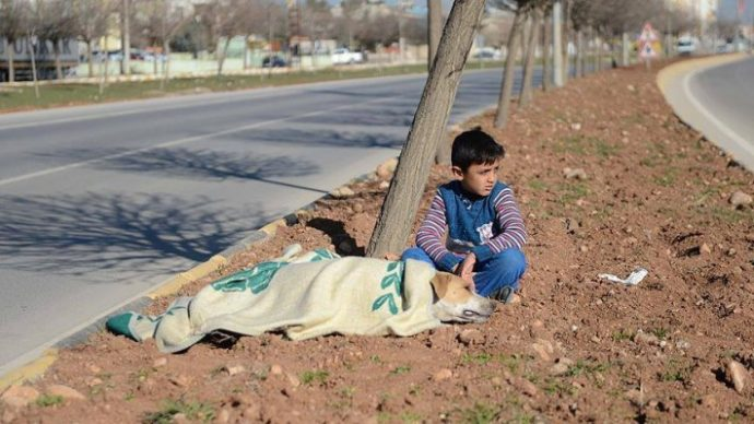 01-refugee-comforts-stray-dog-710x399