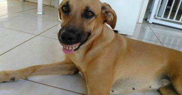 02-dog-wearing-dentures-710x399
