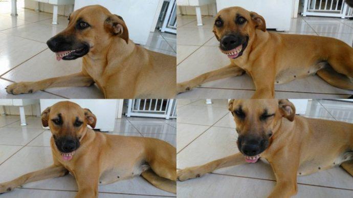 03-dog-wearing-dentures-710x399