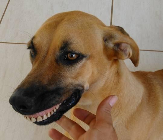 04-dog-wearing-dentures-e1510170146254