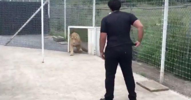 04-kiara-lioness-667x350