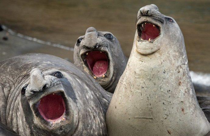 Вот это подловили! :) 14 животных, которых такими смешными вы не видели НИКОГДА!