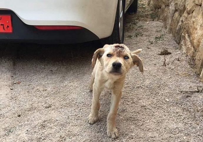 Собаку начинили дробью, словно пирог изюмом... Что теперь думает о людях этот пёс с доверчивыми глазами?!