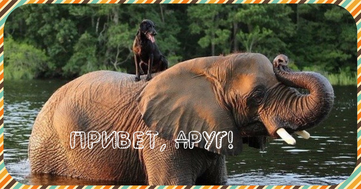 Слон и лабрадорная Моська! :) Этот пёс использует своего громадного друга как трамплин, кровать, катапульту для мячей и ещё много чего! :)