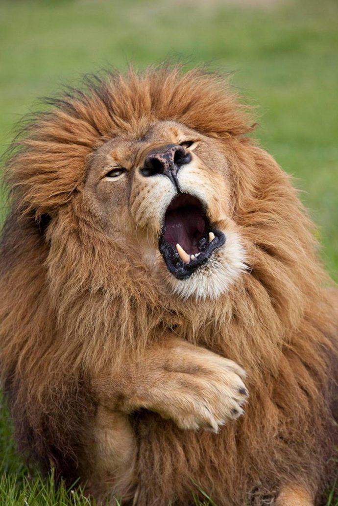 Вот это подловили! :) 14 животных, которых такими смешными вы не видели НИКОГДА! рис 10