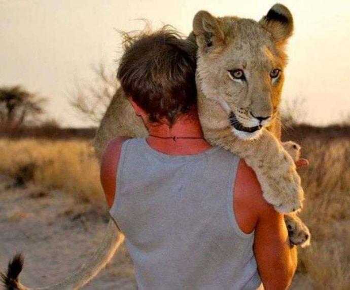 Маленькую львицу бросил прайд, но спасли люди! И вот снова ей пришло время остаться одной... рис 9