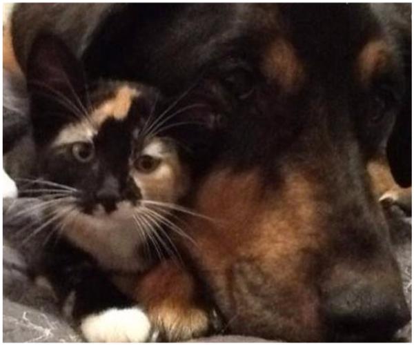 Кот страшно тосковал, когда умер его лучший друг... И теперь он засыпает только с маленьким гаджетом и фотографиями памяти! рис 3
