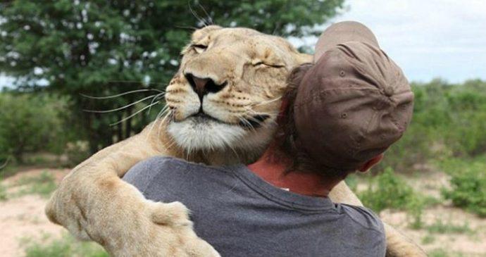 Маленькую львицу бросил прайд, но спасли люди! И вот снова ей пришло время остаться одной... рис 11