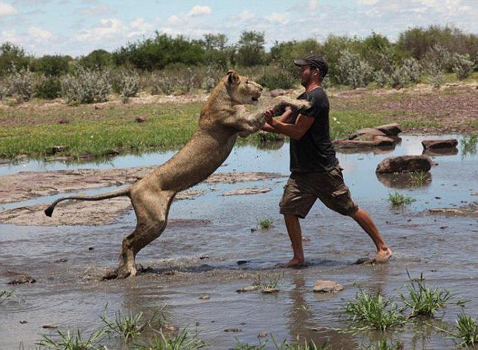 Маленькую львицу бросил прайд, но спасли люди! И вот снова ей пришло время остаться одной... рис 13