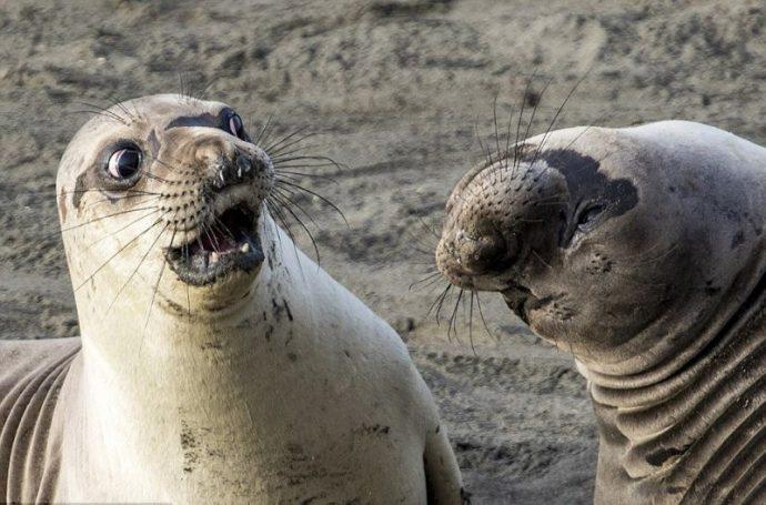 Вот это подловили! :) 14 животных, которых такими смешными вы не видели НИКОГДА! рис 2