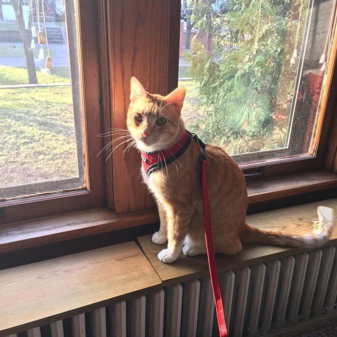 Двойная жизнь кота Макса... Этот проказник успел наделать шуму на всю страну! Смотрите сами : ) рис 9