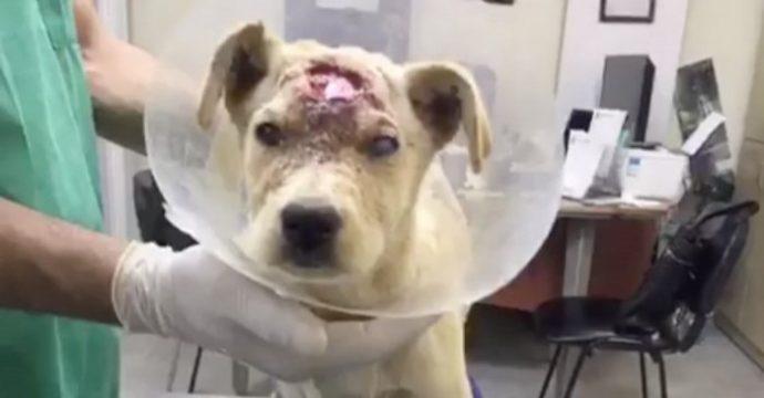 Собаку начинили дробью, словно пирог изюмом... Что теперь думает о людях этот пёс с доверчивыми глазами?! рис 3