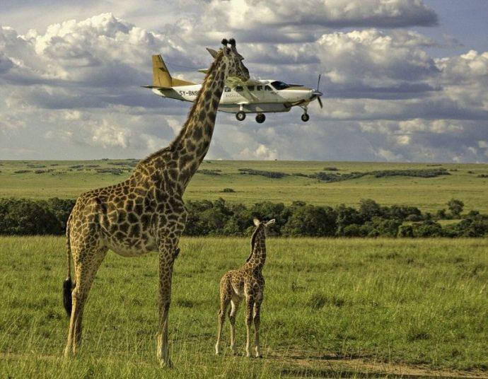 Вот это подловили! :) 14 животных, которых такими смешными вы не видели НИКОГДА! рис 4