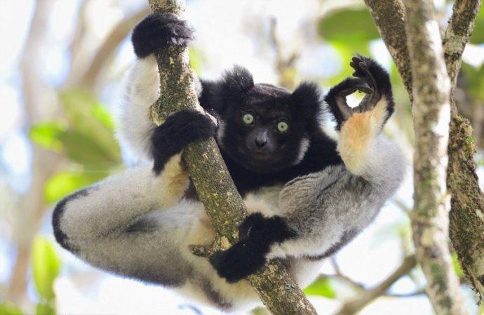 Вот это подловили! :) 14 животных, которых такими смешными вы не видели НИКОГДА! рис 5
