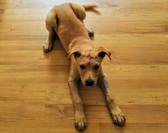 Собаку начинили дробью, словно пирог изюмом... Что теперь думает о людях этот пёс с доверчивыми глазами?! рис 5