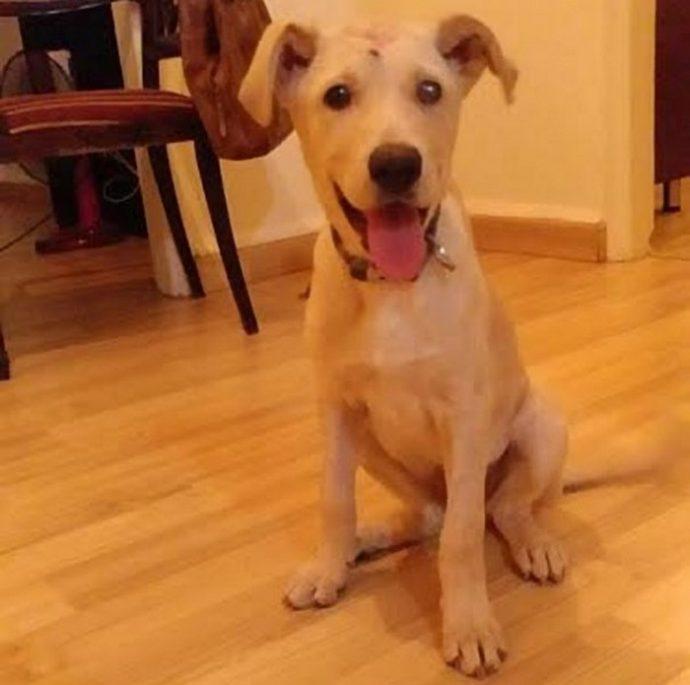 Собаку начинили дробью, словно пирог изюмом... Что теперь думает о людях этот пёс с доверчивыми глазами?! рис 6