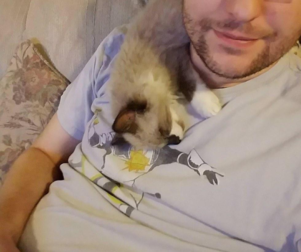 Гараж: кошачья версия! Однажды мужчина услышал плач на участке своего соседа... Теперь спасённый малыш - главный позитивчик в доме! :) рис 9