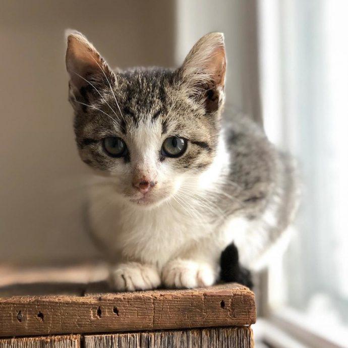 Развозчица почты заметила маленький пушистый комок, бегущий за ее грузовиком! Котенка не только спасли, но и нашли его брата! рис 7