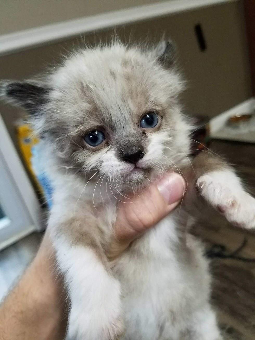 Гараж: кошачья версия! Однажды мужчина услышал плач на участке своего соседа... Теперь спасённый малыш - главный позитивчик в доме! :) рис 3