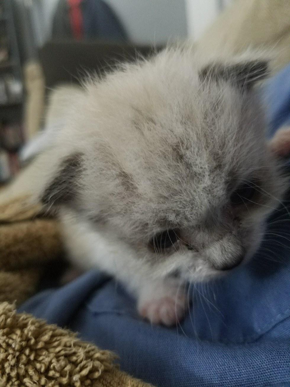Гараж: кошачья версия! Однажды мужчина услышал плач на участке своего соседа... Теперь спасённый малыш - главный позитивчик в доме! :) рис 2
