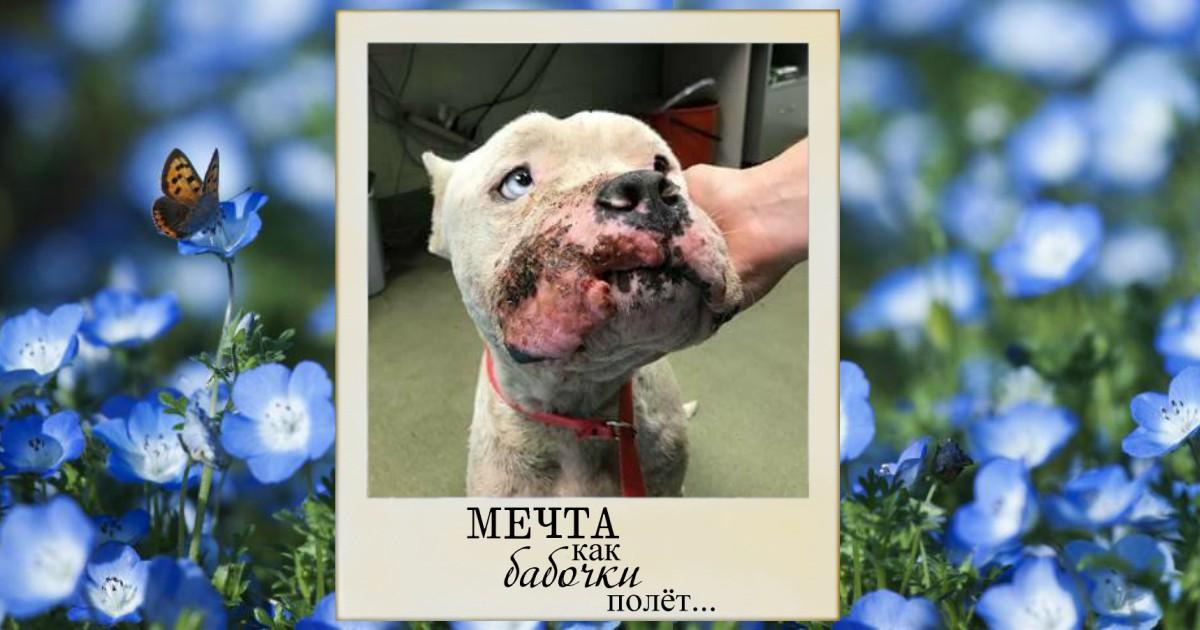 У него глаза измученного ребёнка... Самый добрый, доверчивый и грустный пёс мечтает о том, кто залечит его душевные раны!
