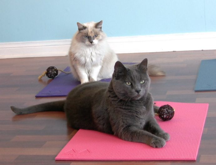 Feline-Yogi-Cat-Yoga-Mat-01